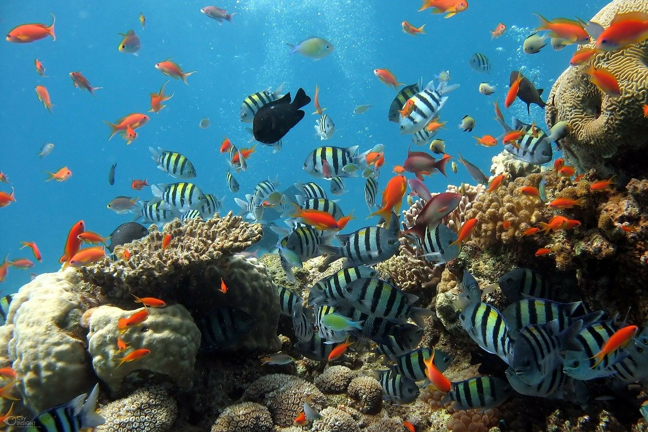 Badanie dna oceanu