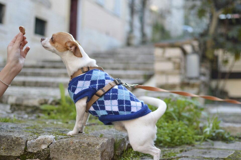 Ubranka dla małych psów