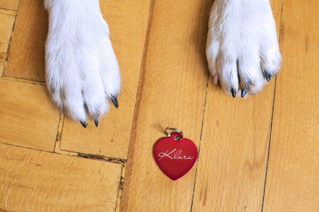 identyfikator dla psa
